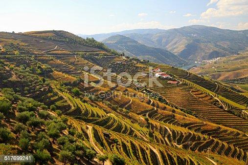 Douro river vineyards, Portugal
