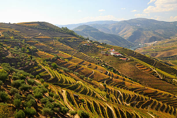Douro Valley, Portugal Douro river vineyards, Portugal duero stock pictures, royalty-free photos & images