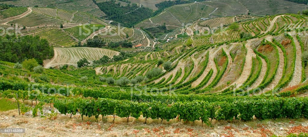 Vallée du Douro, Portugal stock photo