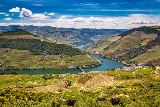 Douro Valley - Vila Real District, Portugal View Of Vineyards In Douro Valley From Double Viewpoint De Loivos - Vila Real District, Portugal, Europe duero stock pictures, royalty-free photos & images