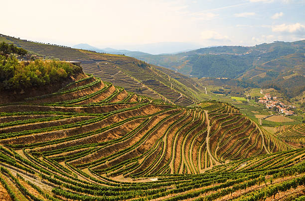 Douro Valley: Vineyards near Duero river and Pinhao, Portugal Douro Valley: Vineyards near Duero river and Pinhao, Portugal duero stock pictures, royalty-free photos & images