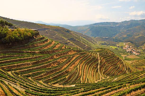 Douro-Tal: Weinberge in der Nähe von Duero river und Pinhao, Portugal – Foto