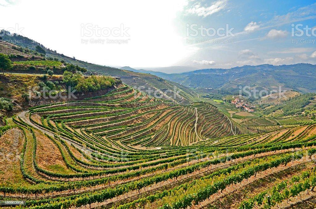Douro Valley - Vineyards near Pinhao, Portugal stock photo