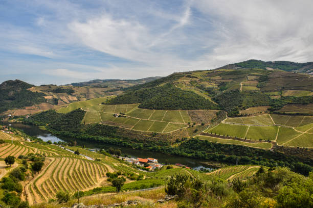 douro valley with its slopes filled with vineyards - vila real imagens e fotografias de stock