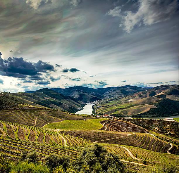 Douro Vineyards Douro river vineyards fields, Alto Douro, Portugal duero stock pictures, royalty-free photos & images