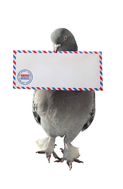 """Résultat de recherche d'images pour """"pigeon voyageur"""""""