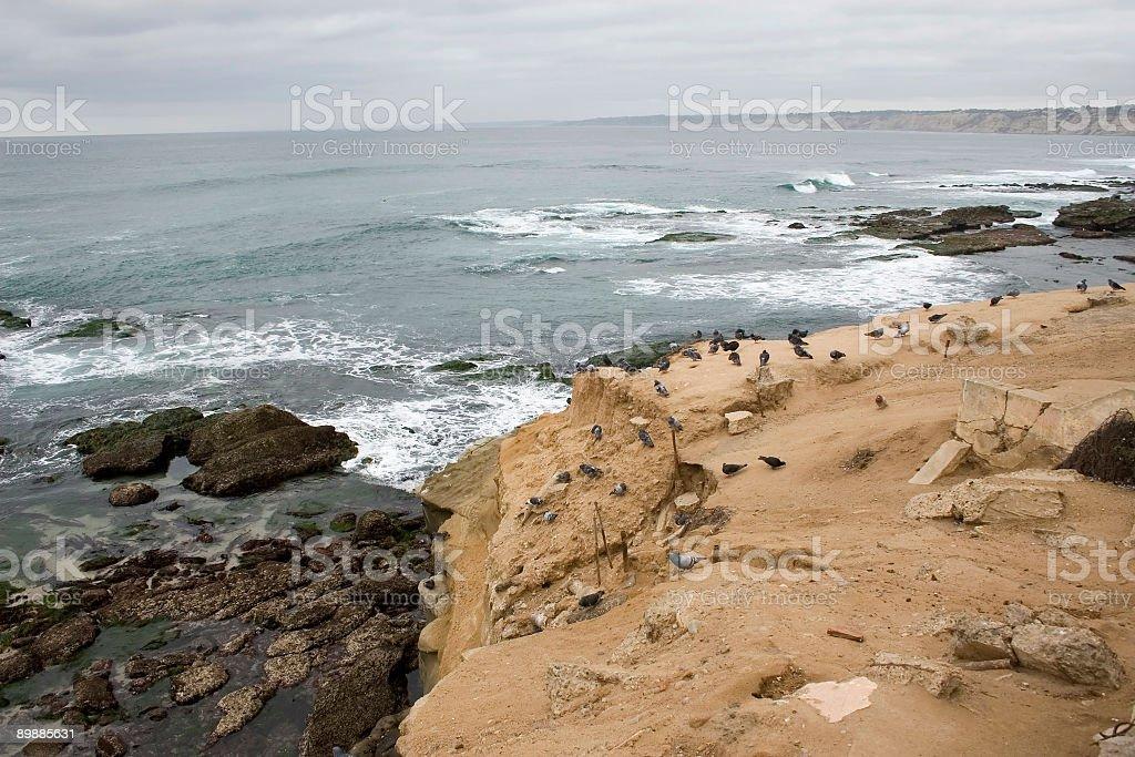 Голубь Cliff Стоковые фото Стоковая фотография
