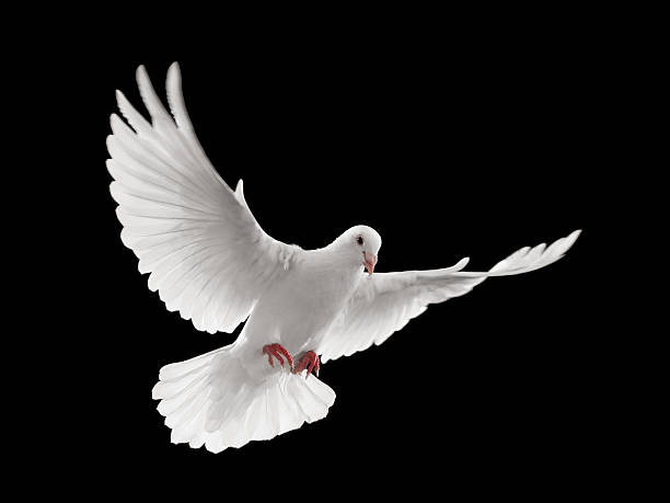 dove flying - symbols of peace stock pictures, royalty-free photos & images