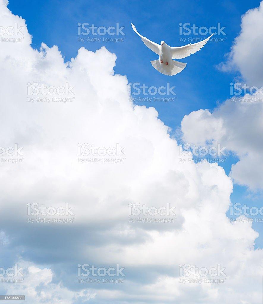 dove in the sky stock photo
