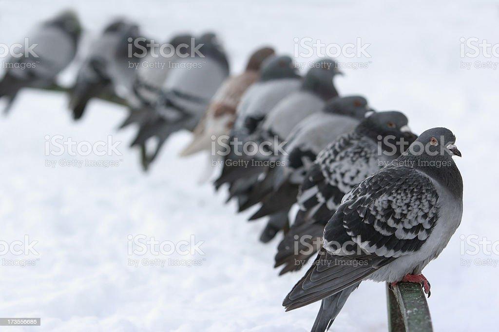 Dove Auswahl – Foto
