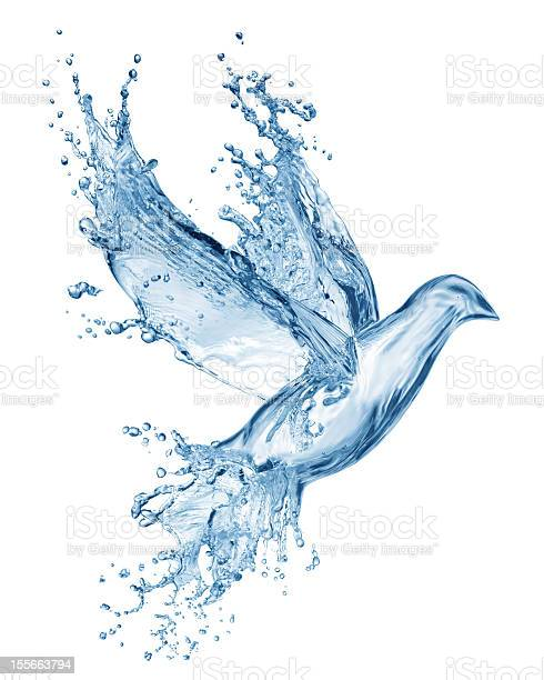 Dove made out of water splashes picture id155663794?b=1&k=6&m=155663794&s=612x612&h=9sxrbndysbujmx6z0ja5efslua61fxk5bjjyg3onbqe=