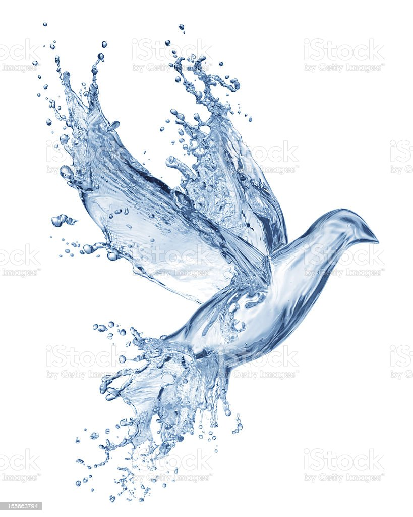 dove made out of water splashes stock photo