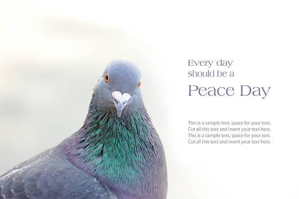 dove oder Brieftaube, Frieden Nachricht – Foto
