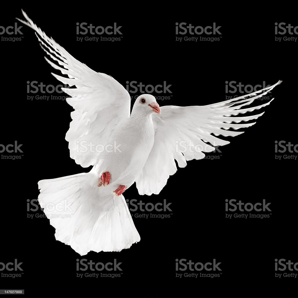 dove royalty-free stock photo