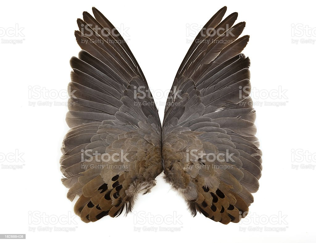 Dove Wings royalty-free stock photo