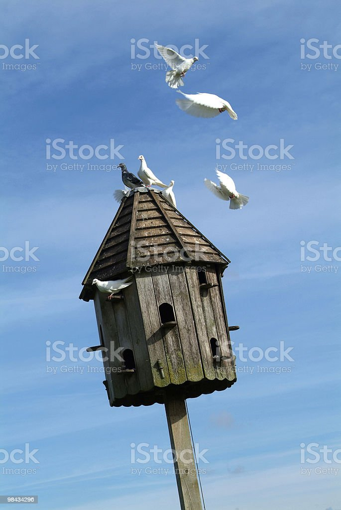 Dovecot with doves royalty-free stock photo