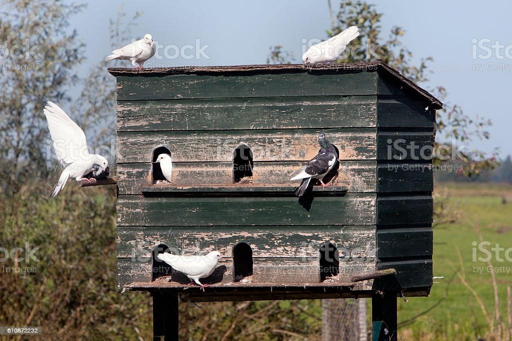 Dovecote and pigeons in love​​​ foto