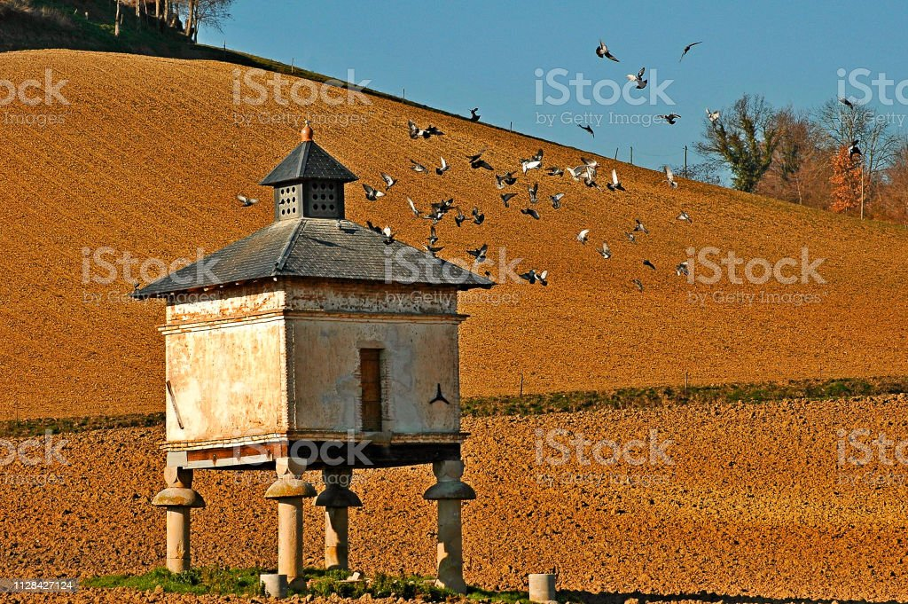 Dovecote with doves stock photo