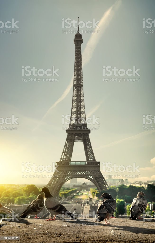 Doves and Eiffel Tower stock photo