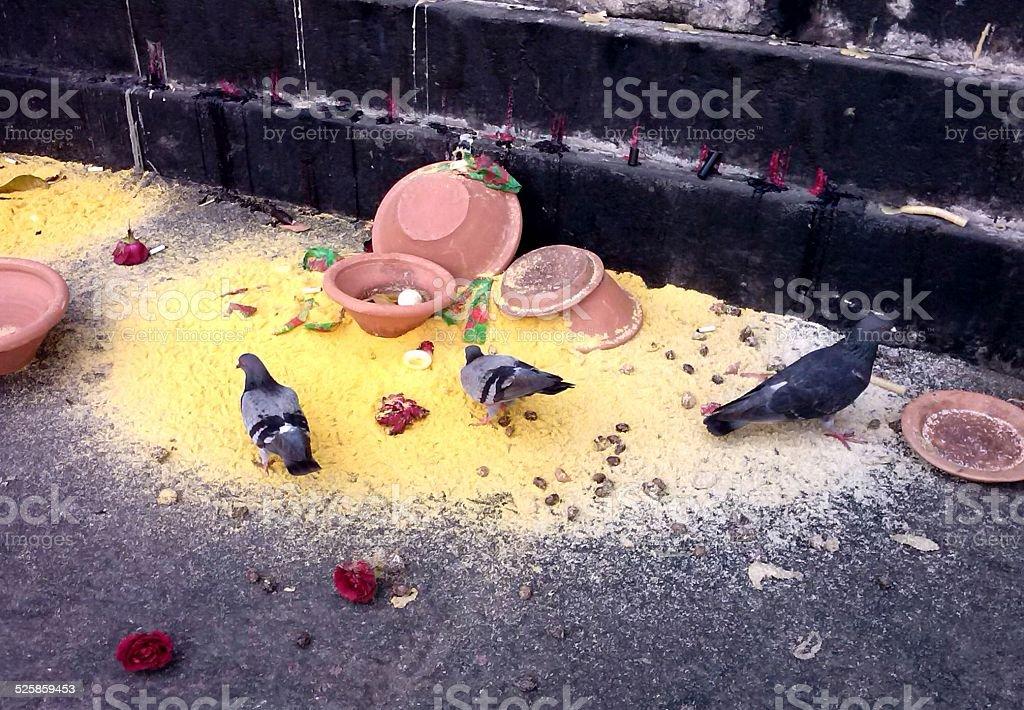 Doves eat corn work of voodoo stock photo