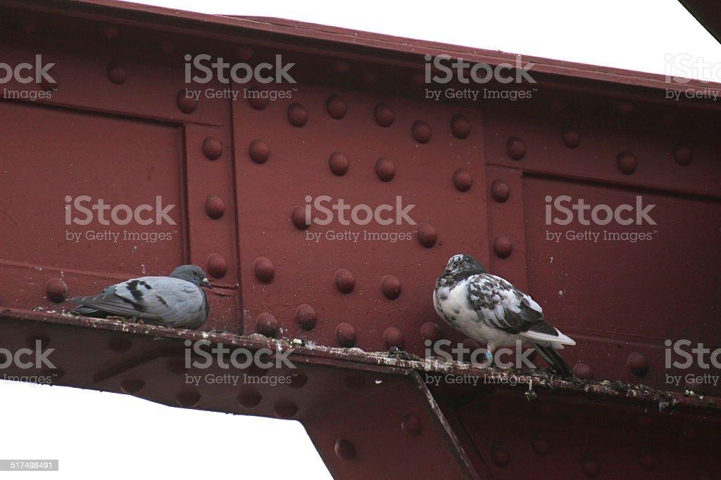 Doves in gap stock photo
