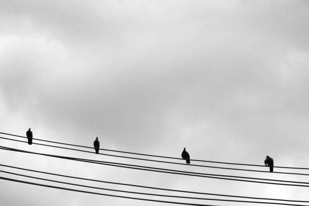 Doves standing on electric power wire – zdjęcie