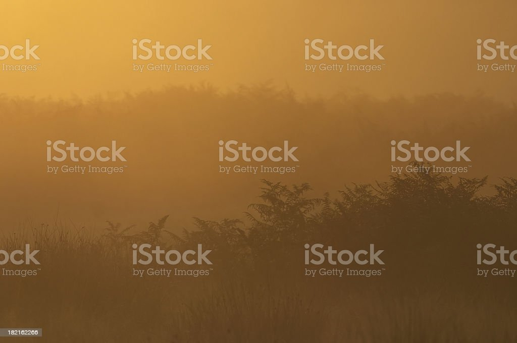 Background glowing landscape bathed in orange dawn light stock photo