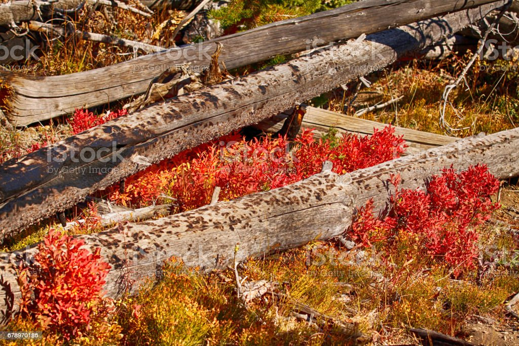 Down fall, late-summer fireweed on the Mt. Washburn, Yellowstone NP, Wyoming, USA royalty-free stock photo