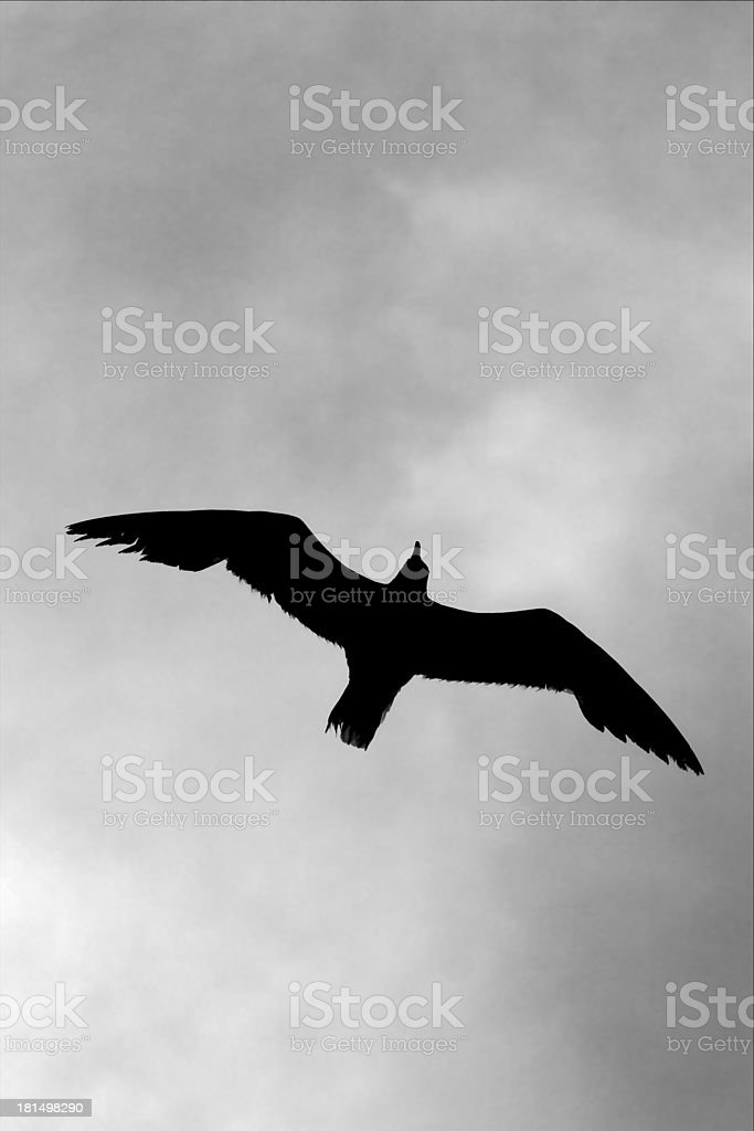 down of sea gull flying royalty-free stock photo