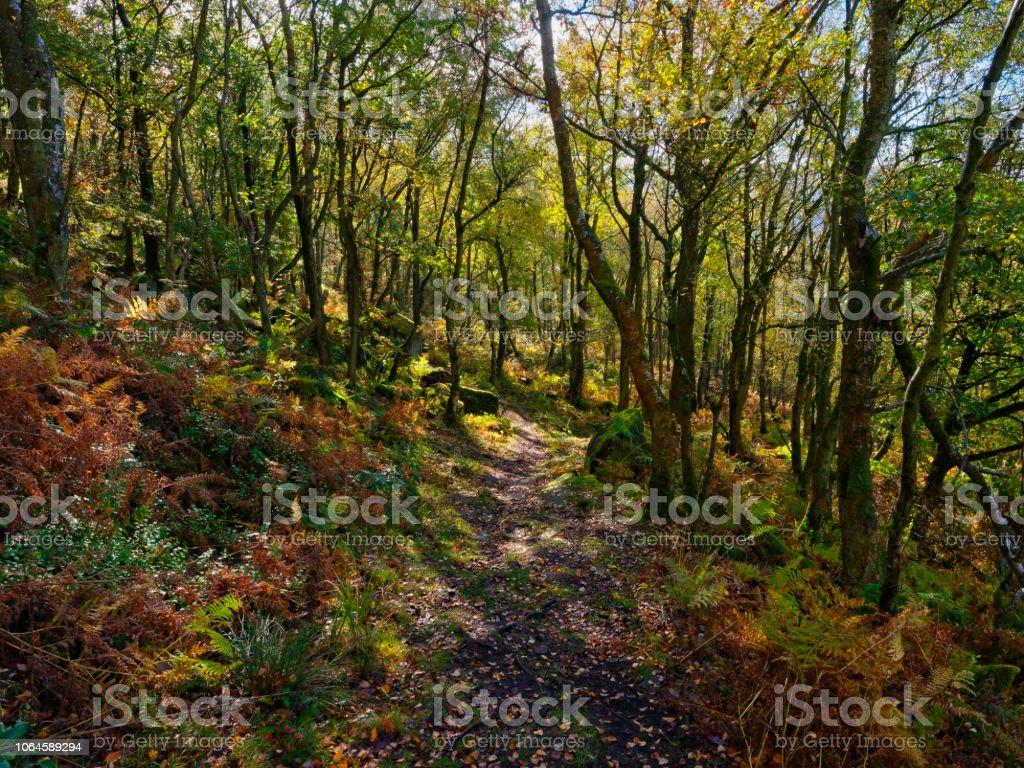 Down the steep woodland path stock photo