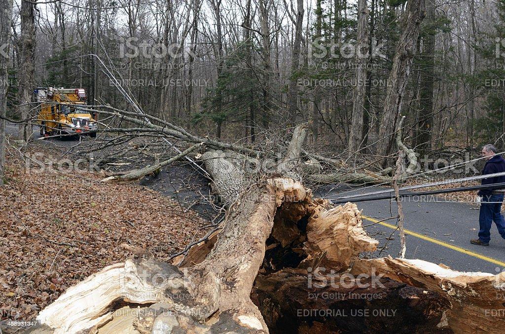 Down tree. royalty-free stock photo