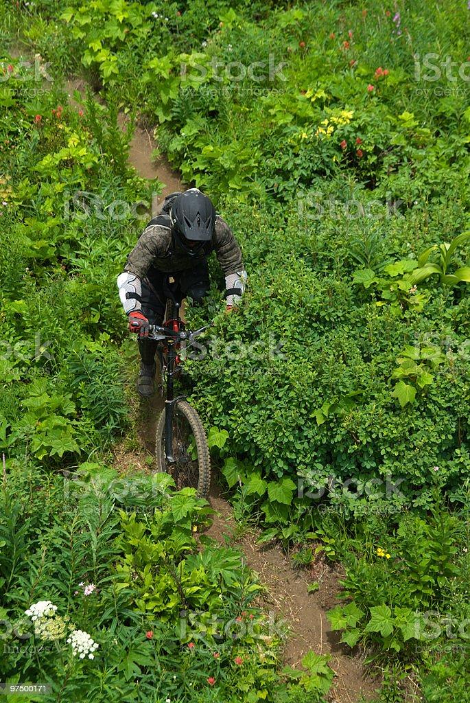 Downhill Mountain Biker royalty-free stock photo
