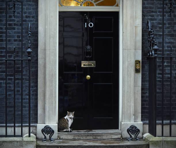 Downing Street Katze – Foto