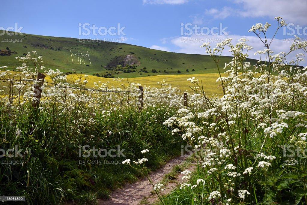 Downland path stock photo