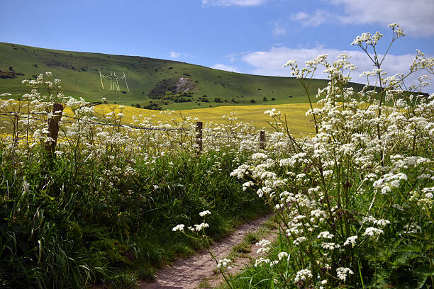 downland path - east sussex stockfoto's en -beelden