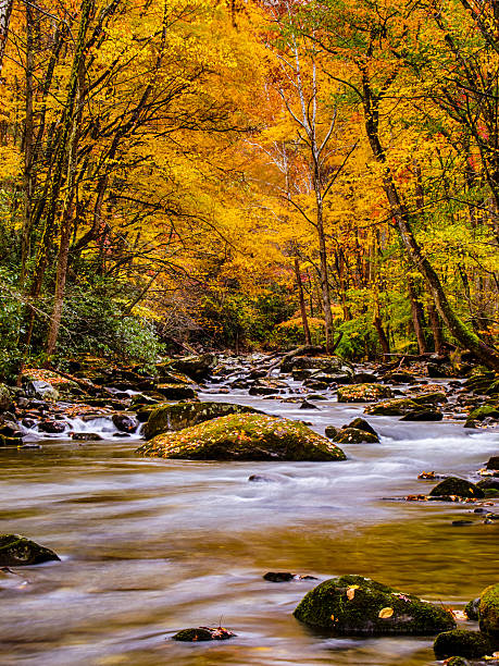 Downstream at Elkmont stock photo
