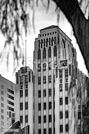 A downtown building through the trees in Phoenix, Arizona.