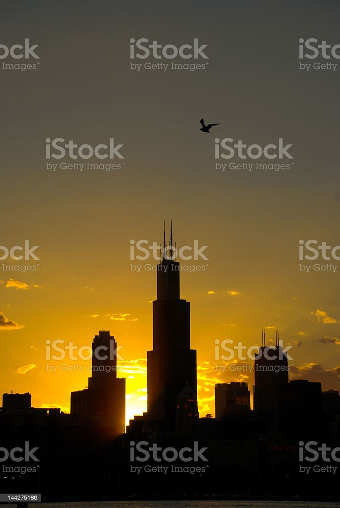 Downtown Chicago, sunset royalty-free stock photo