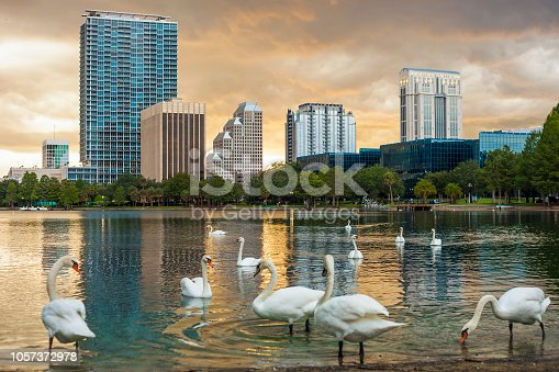Downtown Orlando, Florida with swans on Lake Eola.