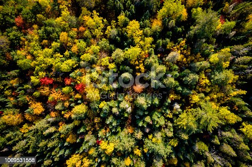 Aerial view of a lush forest in autumn
