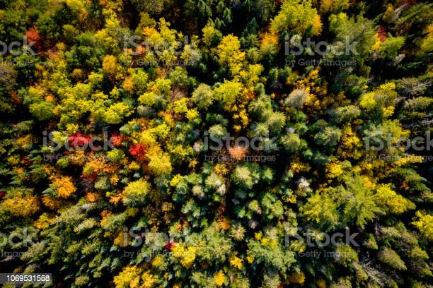 Photo of Downward view of a woodland in autumn