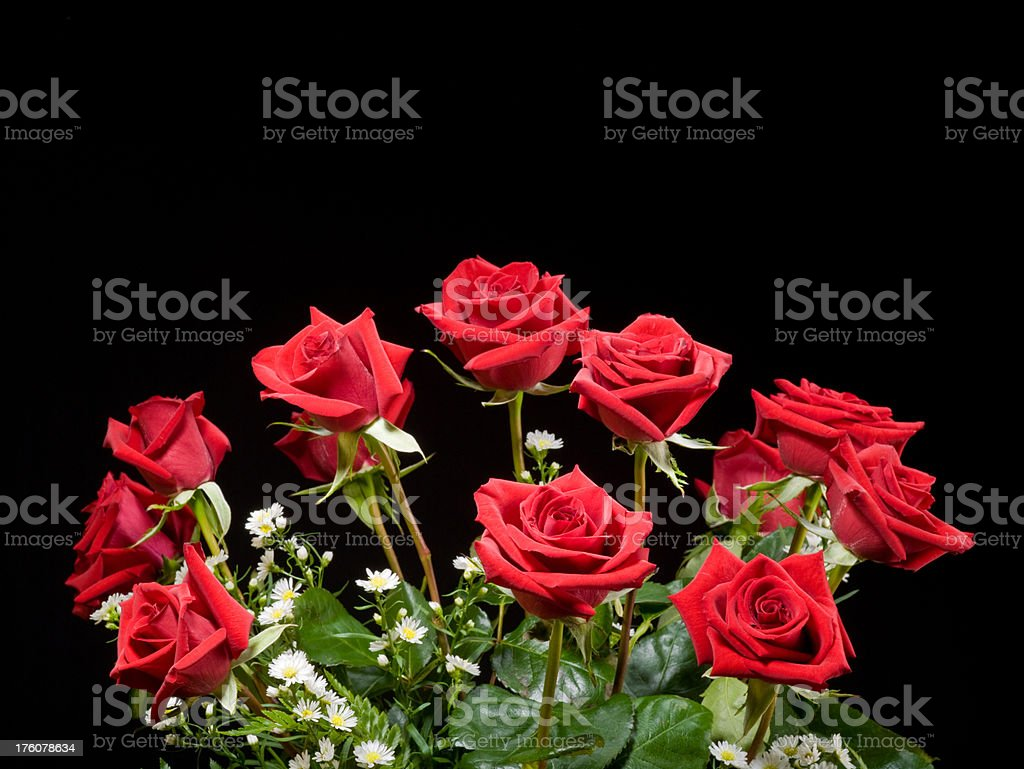 Dozen roses with black background stock photo