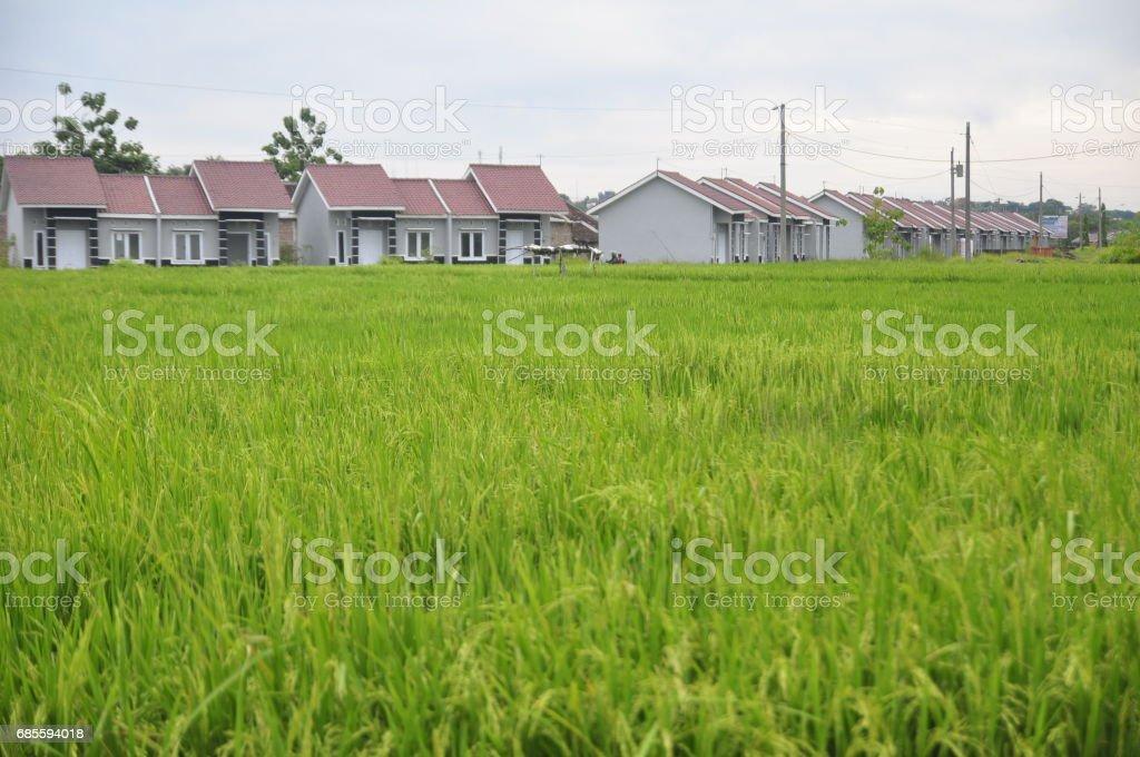 數十座房屋面積 pucangading、 demak、 中部爪哇、 印尼站 免版稅 stock photo