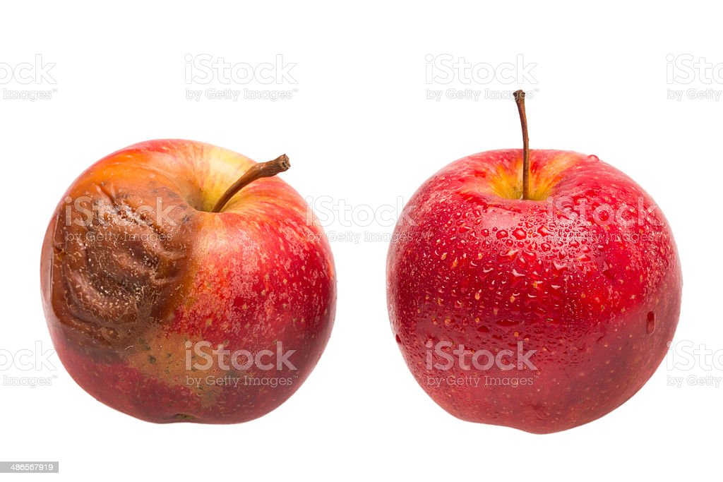 Dozy red apple as comparison to fresh fruit stock photo