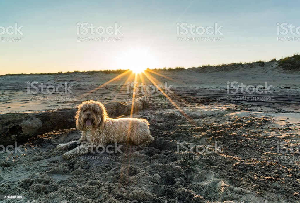 Dpg Lays under Beach Sunset stock photo