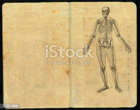 istock Dr Huesos Sketch Pad 173015887