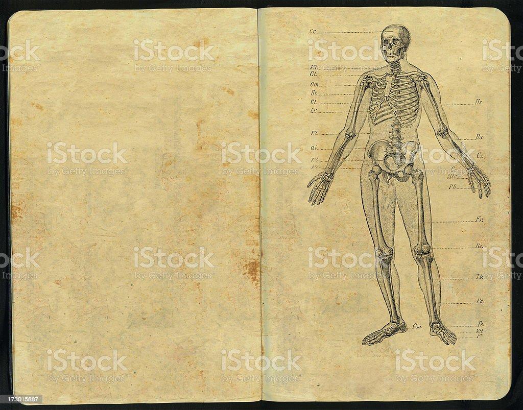 Dr Huesos Sketch Pad stock photo