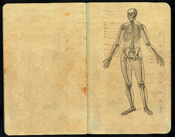dr. huesos skizzenblock - anatomie buch stock-fotos und bilder