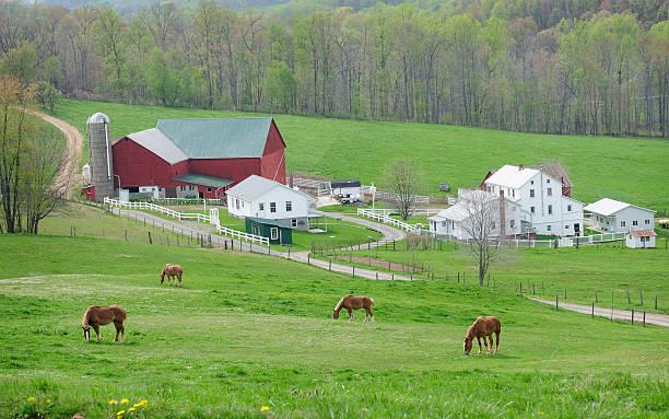 Draft Horses at Amish Farm stock photo
