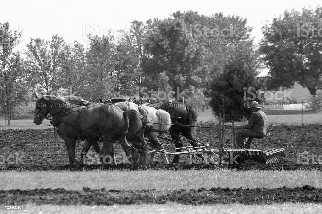draft horses disking stock photo